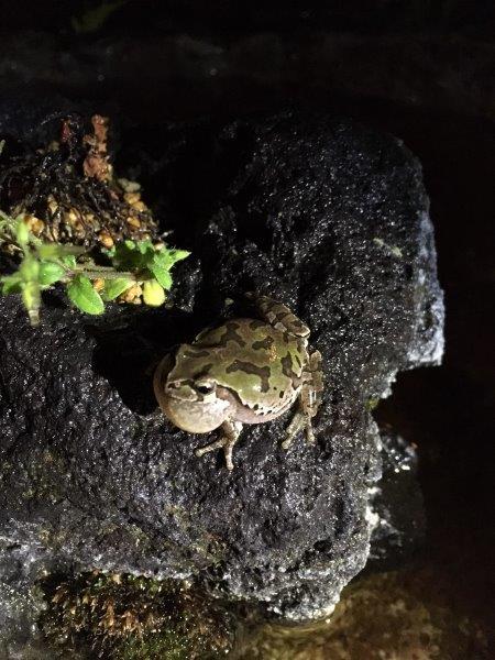 カエル① 小.jpg