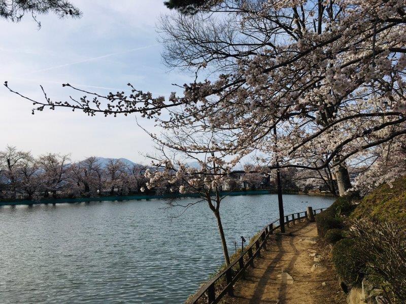 臥竜公園・桜 小.jpg